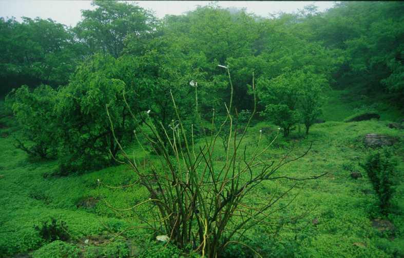 خريف صلالة 2010 احلى خريف صلالة سلطنة عمان